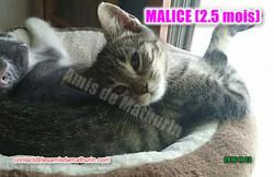 Malice 03