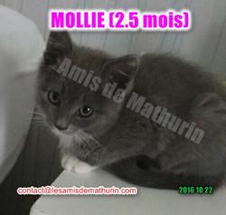 MOLLIE 04