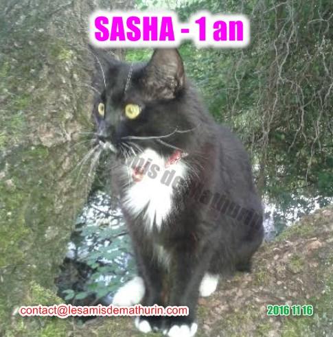 SASHA modif 01