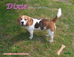 DIXIE 03