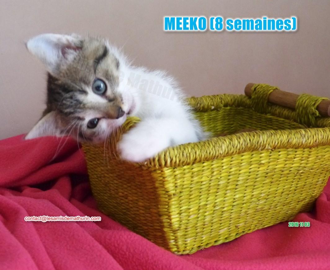 MEEKO modif 02