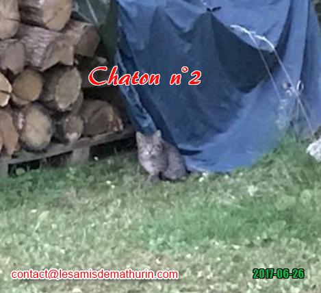 Chaton 02