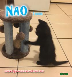 NAO 02