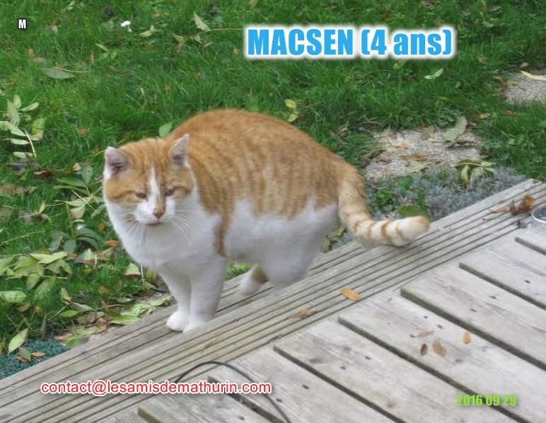 MACSEN modi21