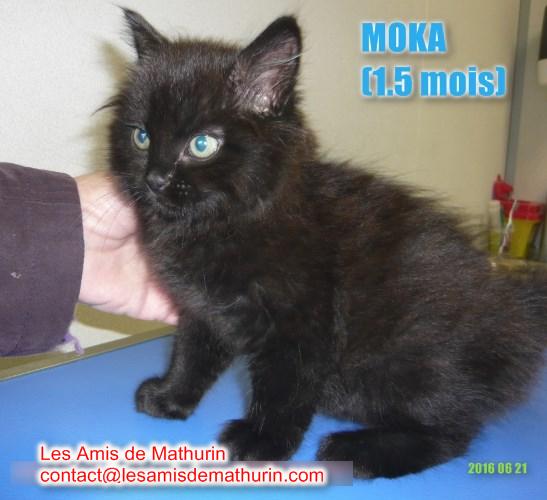 Moka 1