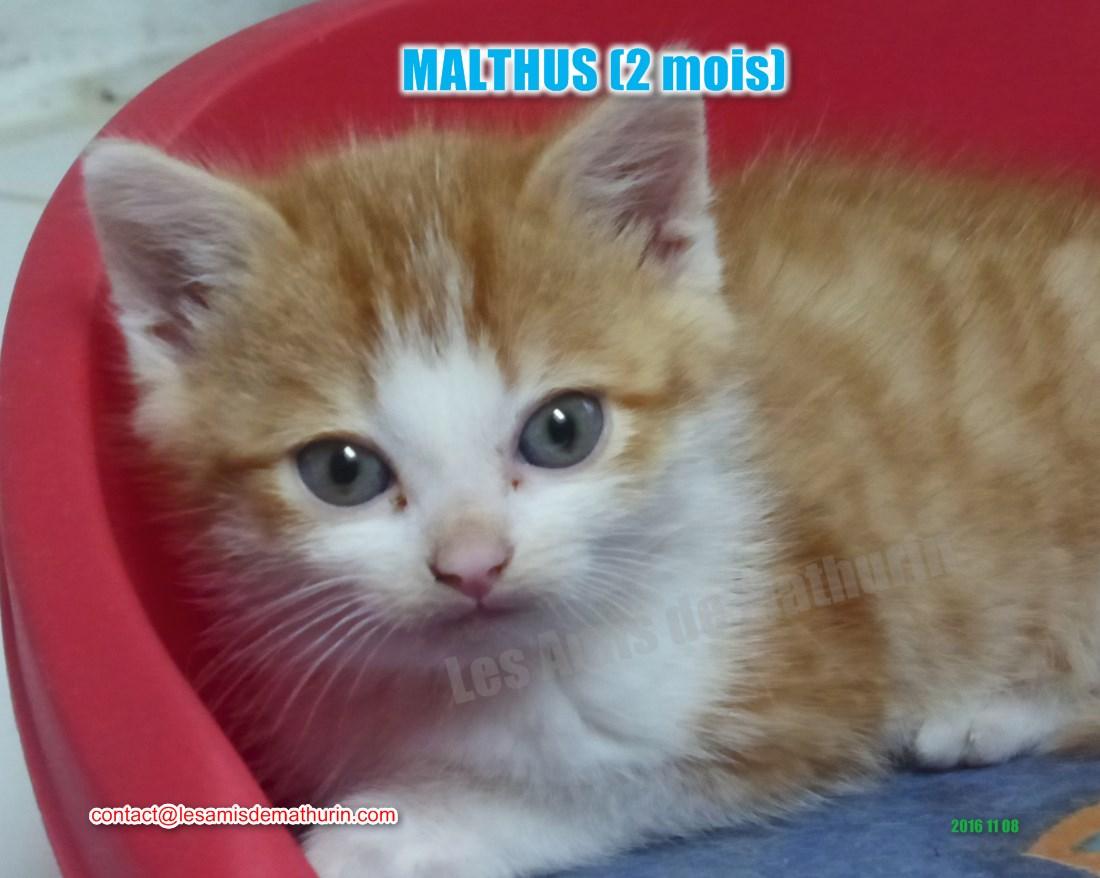 MALTHUS modif 03