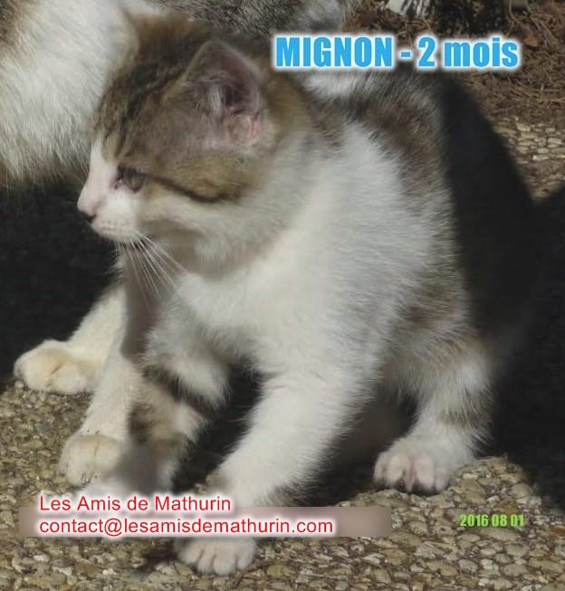 MIGNON 2 modif