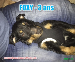 FOXY modif 02