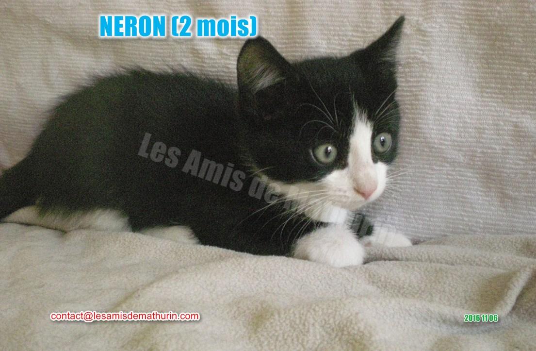 NERON modif 01
