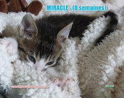 MIRACLE modif 01