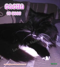 SASHA 04