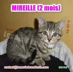 MIREILLE modif 04
