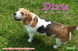DIXIE 05