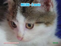 MELOU 04