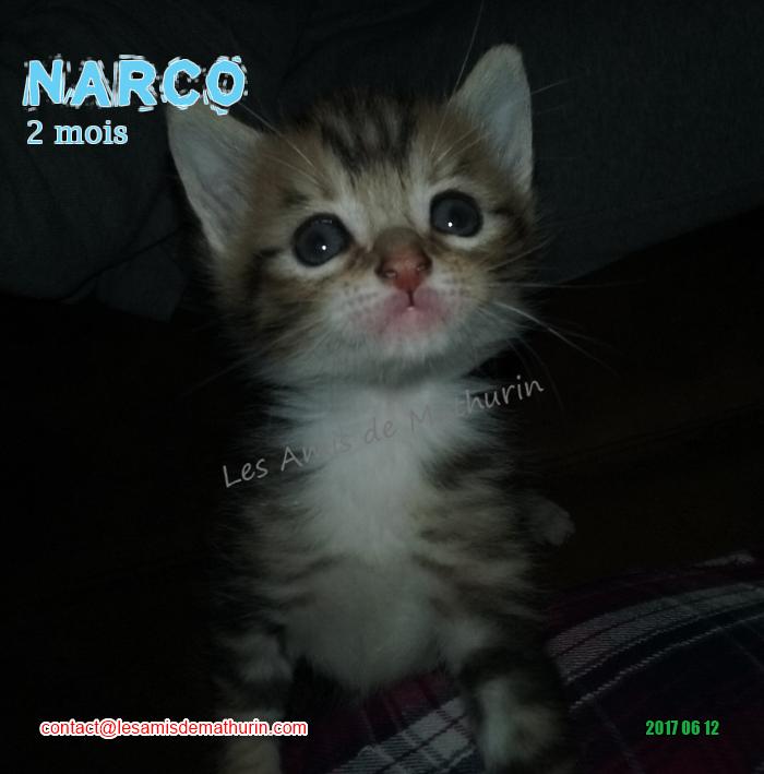 NARCO 01