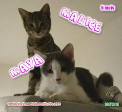 MAYA et MALICE 08