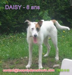 DAISY modif 2