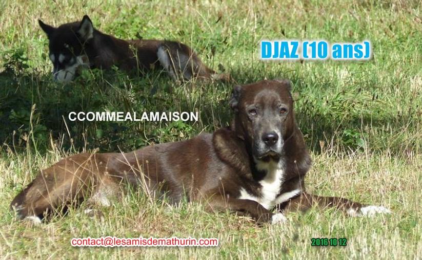 Djaz 03