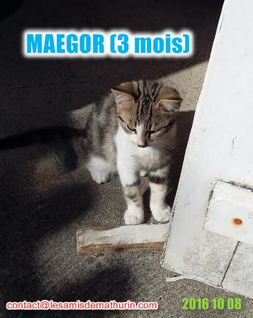 MAEGORmodif1