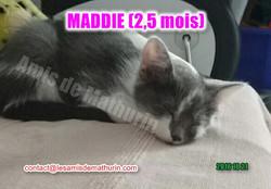 Maddie 5