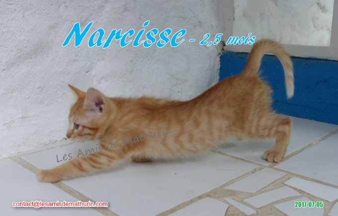 NARCISSE 02