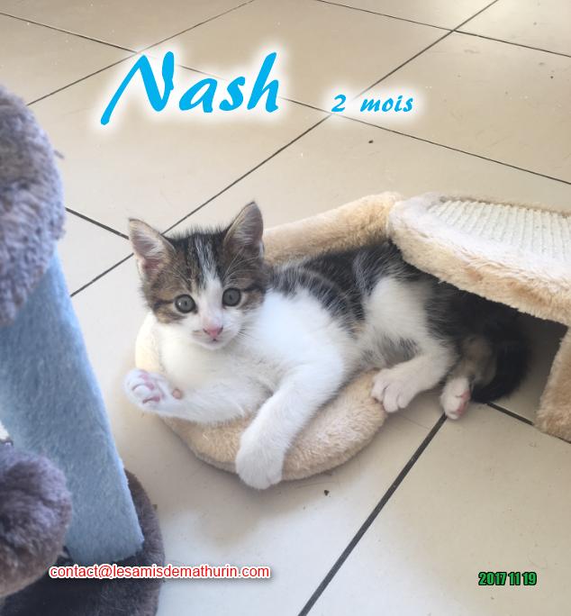 NASH 03