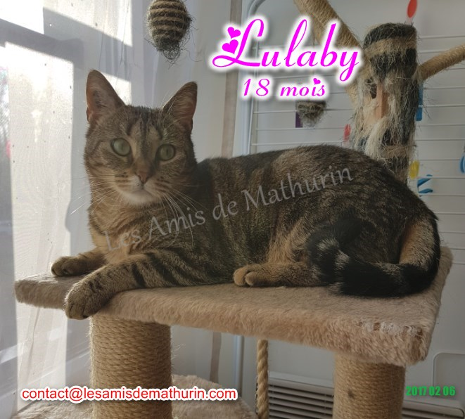 LULABY 05