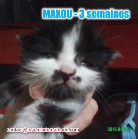 MAXOU_2_modifié