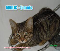 MAGIC modif 02