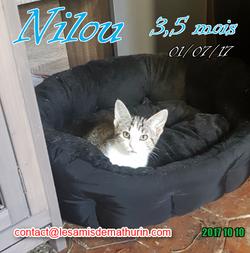 NILOU 05