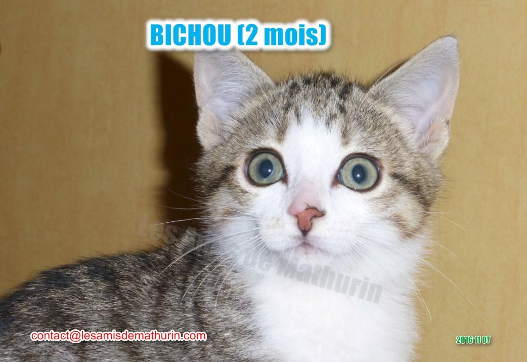 BICHOU modif 09