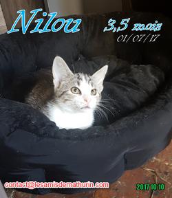 NILOU 03