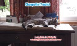 CHOUPETTE 5