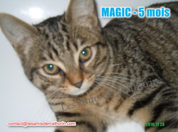 MAGIC modif 05