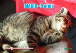 MAGIC modif 03