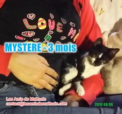 MYSTERE_à_l'adoption_2