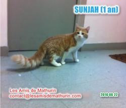 SUNJAH 2