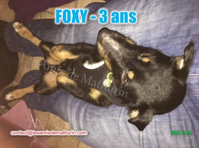 FOXY modif 01
