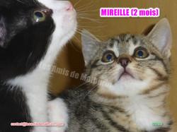 MIREILLE modif 06