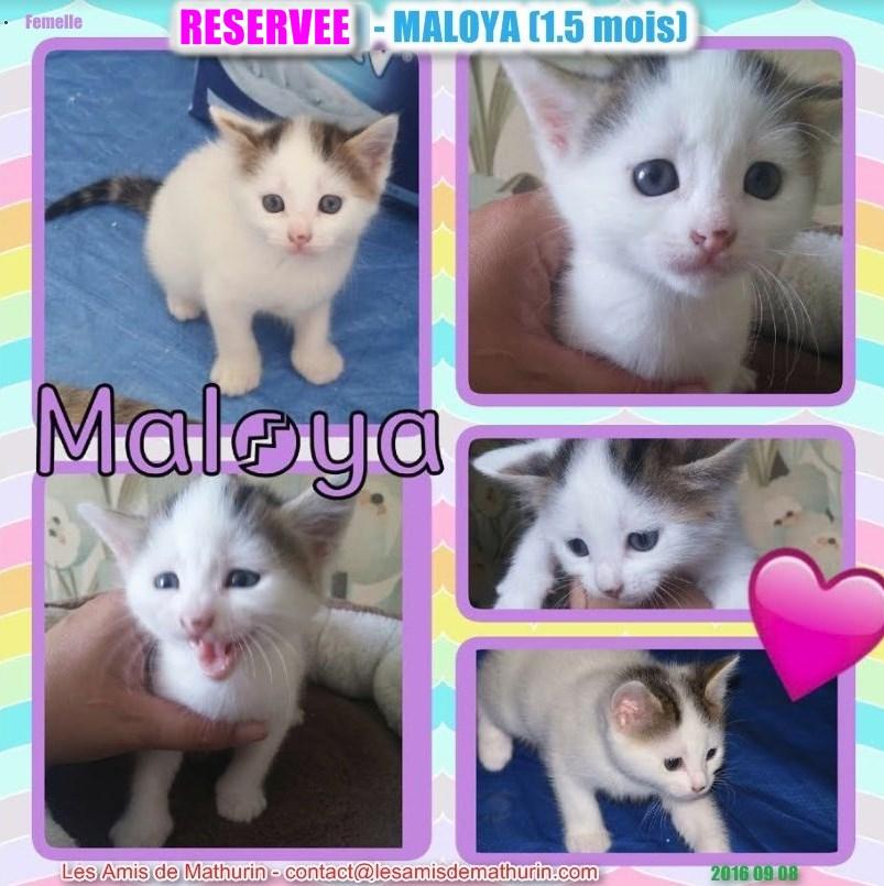 MALOYA - réservée 20160908