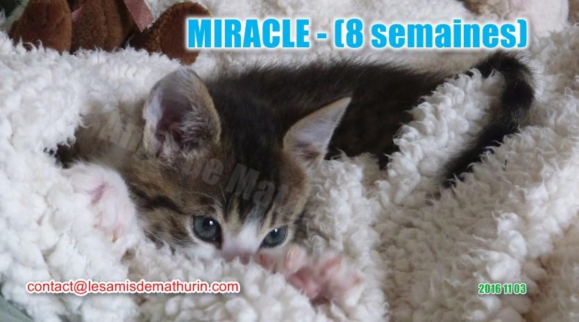 MIRACLE modif 03