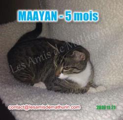 MAAYAN modif 03