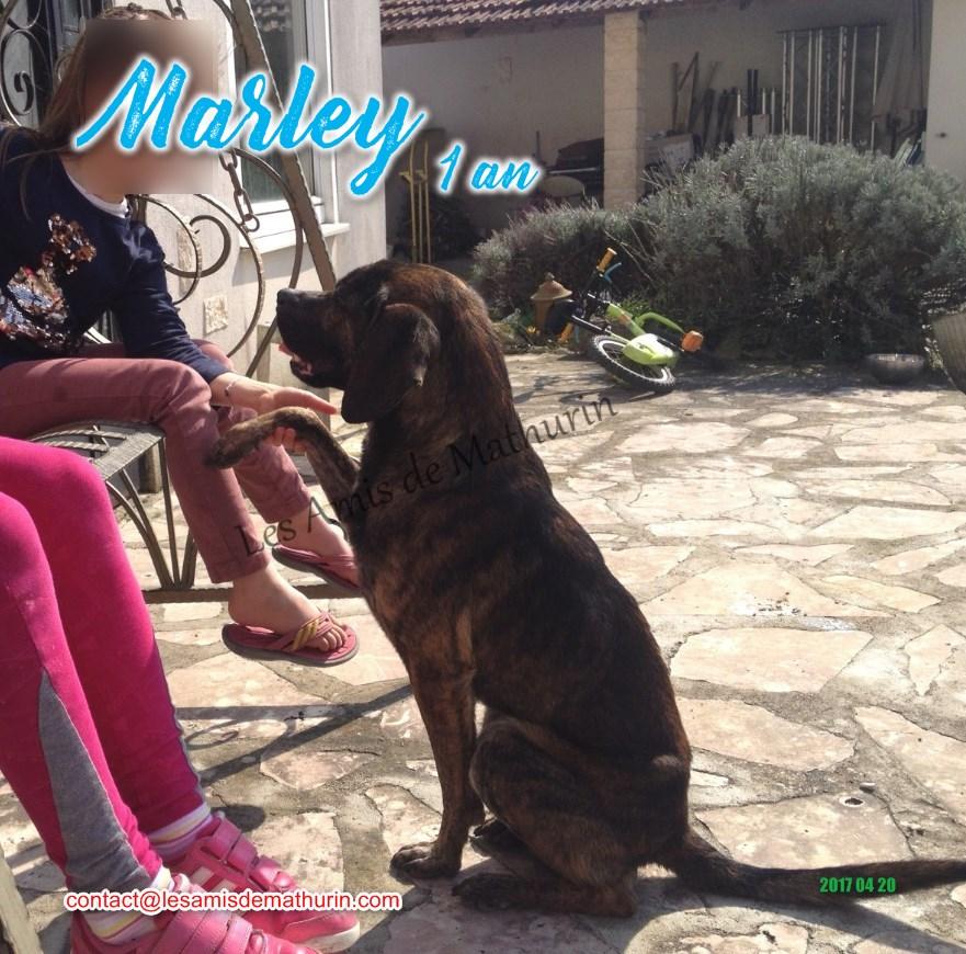 MARLEY 02