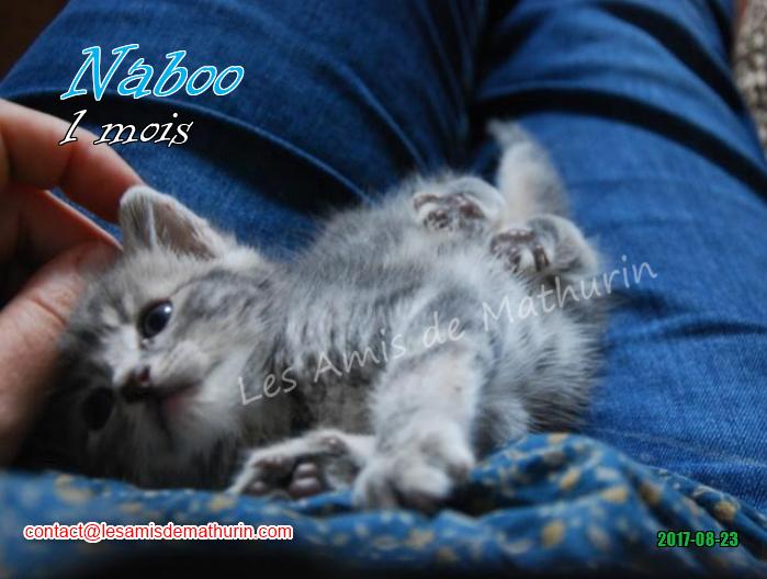 Naboo 05