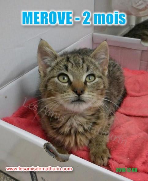MEROVE modif 07