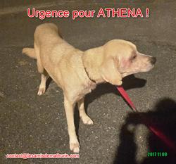 ATHENA 01