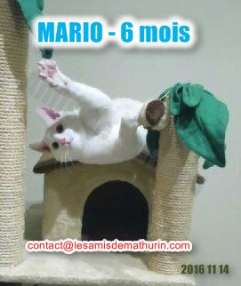 MARIO modif 02