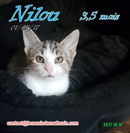 NILOU 02