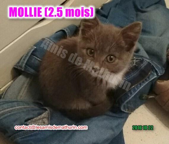MOLLIE 01