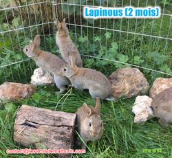 Lapinousmodif2